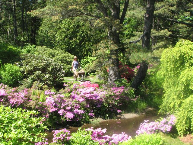 Asticou Garden, Northeast Harbor