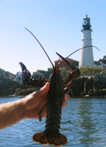 Take a lobster cruise with Capt. Tom Martin aboard the Lucky Catch, out of Portland, and you'll learn everything there is to know about lobsters and see a few lighthouses, too. Hilary Nangle photo.
