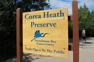 The Corea Heath is especialy prized by birders. Hilary Nangle photo.