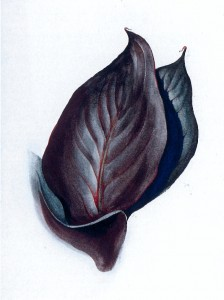 Georgia O'Keeffe, Special No. 38 (Canna Leaves), 1920-1921, Watercolor and graphite on paper, 15 ½ x 11 ½ inches, Bequest of Beth Straus, 2012.6.4Georgia O'Keeffe, Special No. 38 (Canna Leaves), 1920-1921, Watercolor and graphite on paper, 15 ½ x 11 ½ inches, Bequest of Beth Straus, 2012.6.4