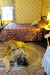 Bernie gets comfy in one of Albee's Shorehouse Cottages in Prospect Harbor. Hilary Nangle photo.IMG_3941