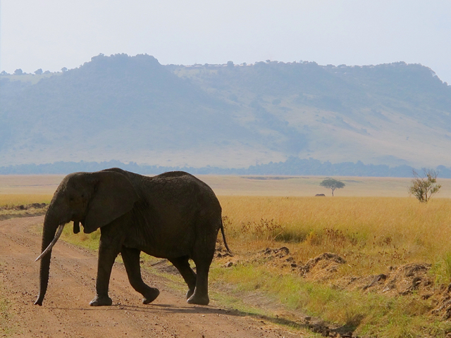 From Angama Mara, atop the ridge in the background, the views extend over the wildlife rich Maasai Mara. ©hilary Nangle