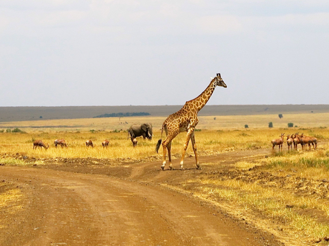 There's so much wildlife in the Mara Triangle that it's not necessary to go out on safari only at dawn or dusk. ©Hilary Nangle