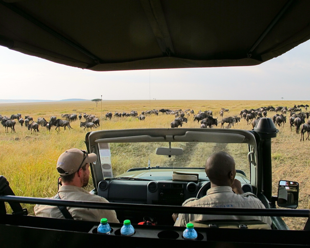 On daily safaris we watched migrating wildlife. ©Hilary Nangle