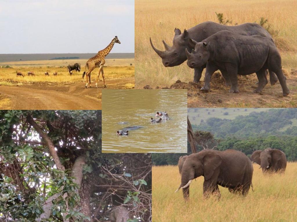 Staying at Angama Mara is an immerson into Kenya's abundant wildlife.©Hilary Nangle
